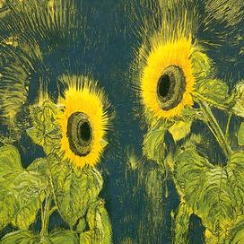 Revealing Nature: Erik Andriesse, 1957–1993